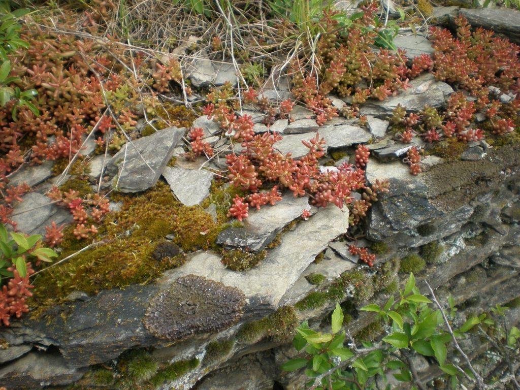 Piquet En Ardoise Bois Jardin le piquet d'ardoise marrie pierre et végétal au jardin avec